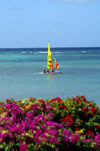 USVI - St. Thomas - sailboat, blue ocean, and purple flowers - colorful wind sail - photo by G.Friedman