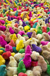 Sayun / Seiyun / Say'un, Hadhramaut Governorate, Yemen: baby chickens, dyed unnatural color - poultry rainbow - Gallus gallus domesticus chicks - photo by J.Pemberton