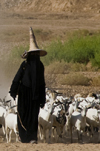 Wadi Hadhramaut, Hadhramaut Governorate, Yemen: local woman leading a trip of goats - abaya and madhalla conical hat - niqab dress - photo by J.Pemberton