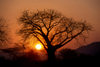 Southern province, Zambia: baobab tree silhouette at sunset - Adansonia digitata - photo by C.Lovell