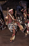 Matabeleland North province, Zimbabwe: Zulu war dance - a Northern Ndebele tribal dancer displays his fierceness and wears animal skins - Matabele - photo by C.Lovell