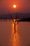 Lake Kariba, Mashonaland West province, Zimbabwe: spectacular watery sunset- silhouette of trees in an area flooded 50 years ago when the Kariba dam was built - photo by C.Lovell